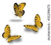 Stock photo butterfly set beautiful yellow butterflies flying up 431298673