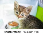 Stock photo close up portrait of the cute tricolor kitten 431304748