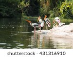 Just Caught The Painted Stork...