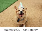 Birthday Corgi