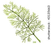 dill herb. thin  aromatic... | Shutterstock . vector #43135663