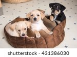 Stock photo litter of terrier mix puppies falling asleep in brown dog bed 431386030