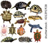 Turtle Tortoise Terrapin Set...