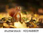Squirrel  Autumn  Nut And Dry...