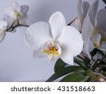 orchid flower   Shutterstock . vector #431518663