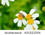 Bees  Flies Copulating On A...