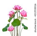 lotus flower on white...   Shutterstock . vector #431553016