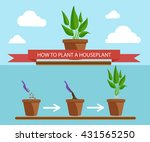 illustration set of houseplants.... | Shutterstock . vector #431565250