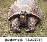 A Giant Tortoise With Mouth...