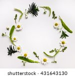 colorful summer round frame... | Shutterstock . vector #431643130