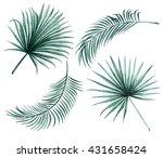 Silk Palm And Fan Palm Green...