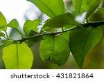 orange ants working on tree...   Shutterstock . vector #431821864