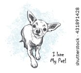 Funny Puppy Chihuahua. Contour...