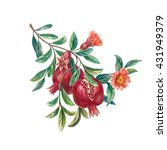 pomegranate on a branch with...   Shutterstock . vector #431949379