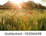 Ukrainian Landscape  Poppy...