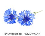 Blue Cornflower   Centaurea On...