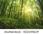sun shining through the trees...   Shutterstock . vector #432144619
