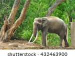 Elephant  In  The Zoo At ...