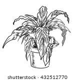 spathiphyllum . houseplant in... | Shutterstock .eps vector #432512770