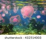 seasonal migration of jellyfish ... | Shutterstock . vector #432514003