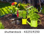 Parsley And  Gardening Tools I...