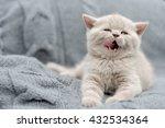 Stock photo cute gray funny baby kitten in gray cloth 432534364
