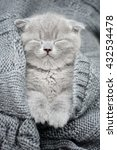 Stock photo cute gray funny kitten sleep in gray cloth 432534478