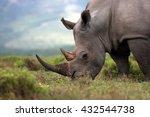 a close up photo of an... | Shutterstock . vector #432544738