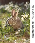 close-up of a brown hare feeding in meadow - stock photo