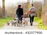 Stock photo dog sitters walking their customers 432577900