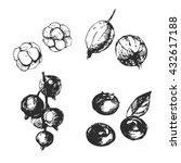sketch berries set  blueberries ... | Shutterstock .eps vector #432617188