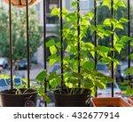 home grown organic vegetable ... | Shutterstock . vector #432677914