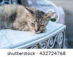 cat | Shutterstock . vector #432724768