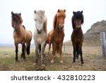 Beautiful Icelandic Horses In...