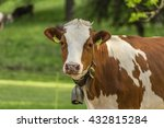 Swiss Young Cow  White Brown...
