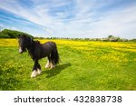 Irish Cob Standing In A Meadow...