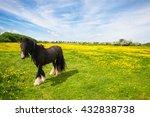 Irish Cob Standing In A Meadow...