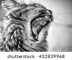 angry cat | Shutterstock . vector #432839968