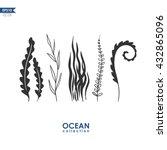 Sea Plants And Seaweed Isolated ...