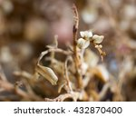 abstract and macro image of ... | Shutterstock . vector #432870400