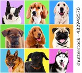 dogs portraits on bright... | Shutterstock . vector #432943570