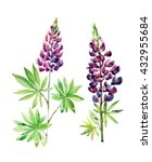 watercolor lupines set isolated ... | Shutterstock . vector #432955684