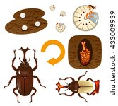 growth cycle of the beetle | Shutterstock .eps vector #433009939