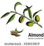 vector hand drawn almond fruit... | Shutterstock .eps vector #433015819