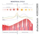 scheme of the menstrual cycle ... | Shutterstock .eps vector #433022800