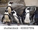 penguins | Shutterstock . vector #433037596