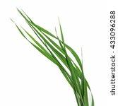 blade of grass on white...   Shutterstock . vector #433096288