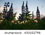 Flowers And Leaves Of Larkspur...