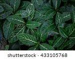 leafs background  | Shutterstock . vector #433105768