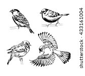 set of four sparrows. hand...   Shutterstock .eps vector #433161004